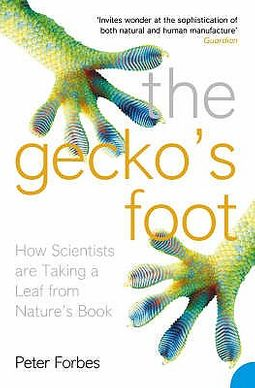 The Gecko?s Foot