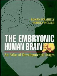 The Embryonic Human Brain