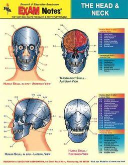Head & Neck Anatomy Exam Notes