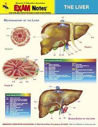 Liver Anatomy Exam Notes