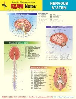 Nervous System Anatomy Exam Notes