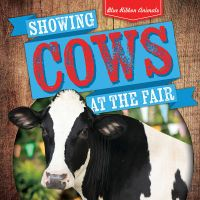 Showing Cows at the Fair