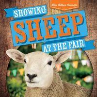 Showing Sheep at the Fair