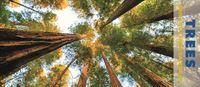 Trees Panoramic 2019 Calendar