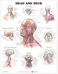 Head & Neck Chart
