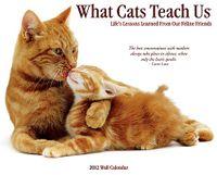 What Cats Teach Us 2012 Calendar