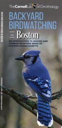 Backyard Birdwatching in Boston
