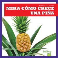 Mira c?mo crece una pi?a / Watch a Pineapple Grow