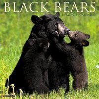 Black Bears 2017 Calendar