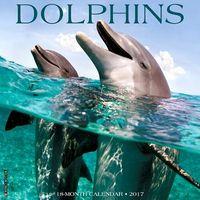 Dolphins 2017 Calendar