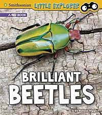 Brilliant Beetles