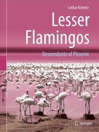 Lesser Flamingos